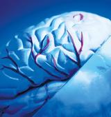 Masterthesis: Neuroleadership - Neuroleadership als wirksame Führung, seine guten Seiten und seine Tücken.