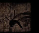 Mosquito Romance